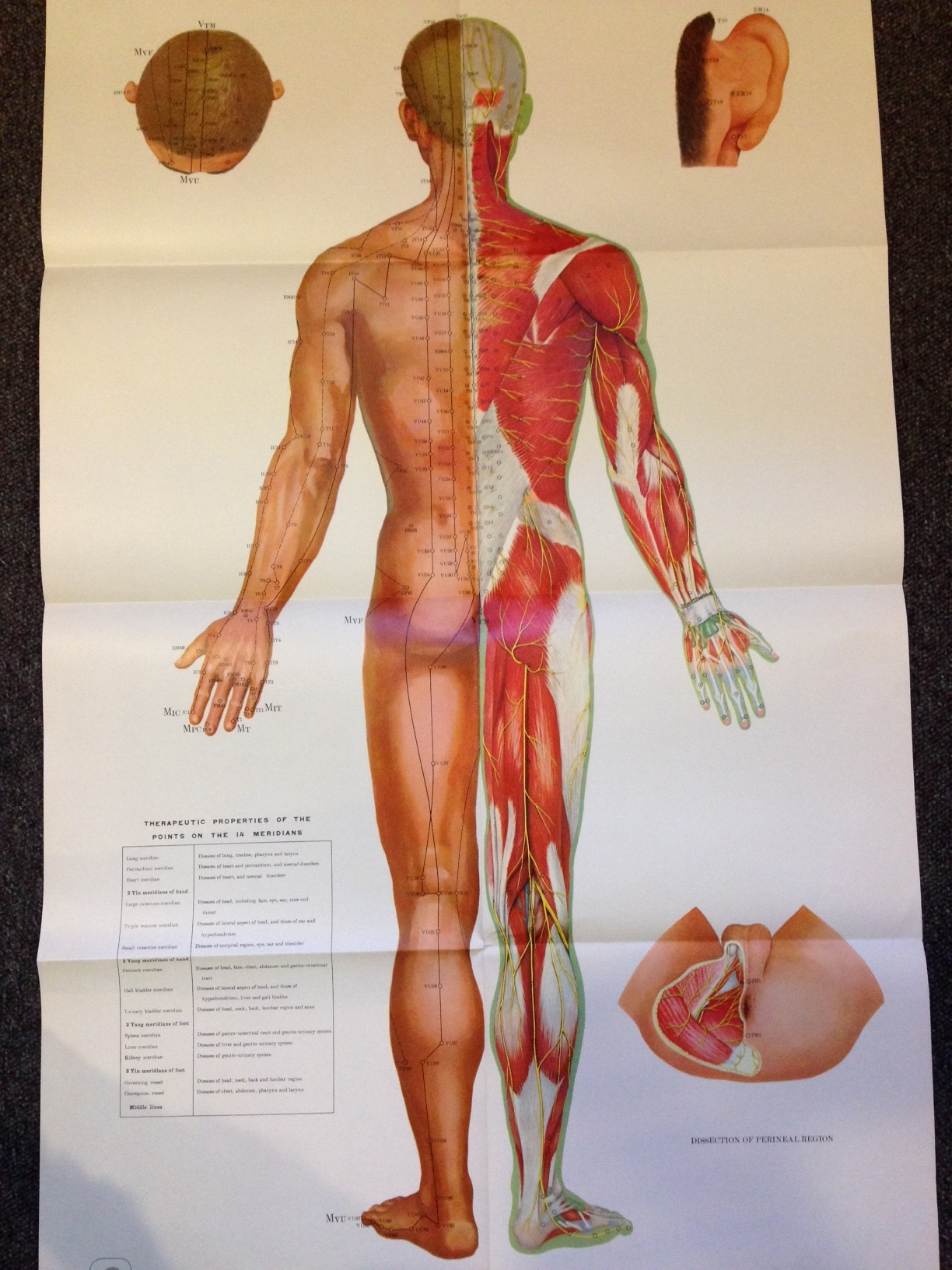Atlas Of Acupuncture Points And Meridians In Relation To Surface